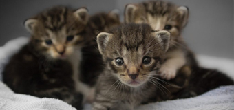 Do you need help caring for your cat's new litter?